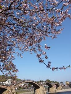 錦帯橋と桜の写真素材 [FYI00177359]