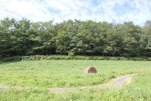 牧草ロールの写真素材 [FYI00177360]