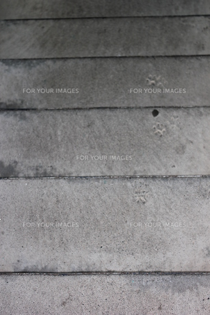 猫の足跡の写真素材 [FYI00177393]