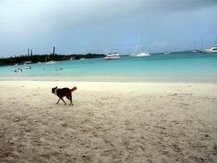 イルデパンの砂浜と犬の写真素材 [FYI00177399]
