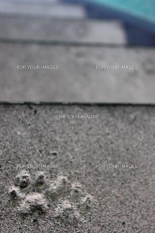 猫の足跡の写真素材 [FYI00177405]