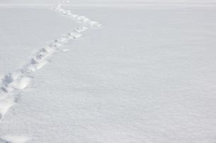 雪の上の足跡の写真素材 [FYI00177416]
