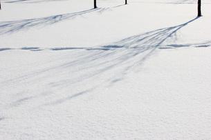 冬の樹木の写真素材 [FYI00177422]