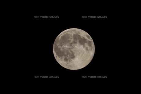 ブルームーン2の写真素材 [FYI00177483]