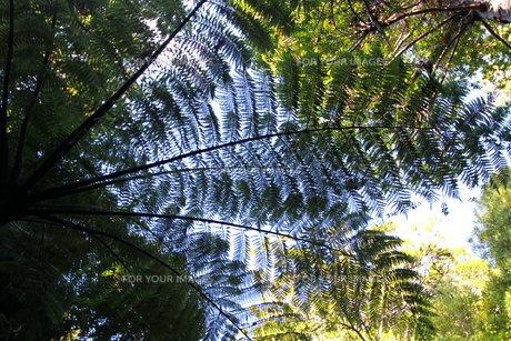 葉っぱの光と影の写真素材 [FYI00177532]