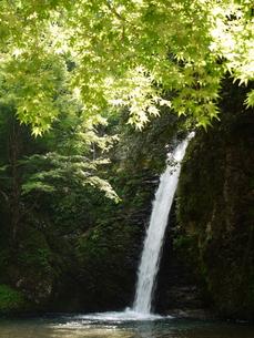 滝の写真素材 [FYI00177649]