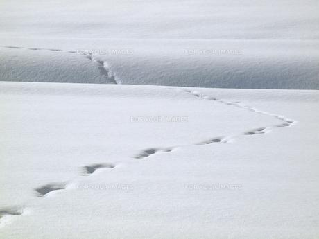 北海道の足跡の写真素材 [FYI00177794]
