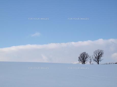 北海道 美瑛 双子の樹と雪原の写真素材 [FYI00177821]