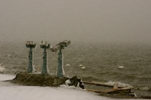 猛吹雪と白鳥たちの写真素材 [FYI00177845]
