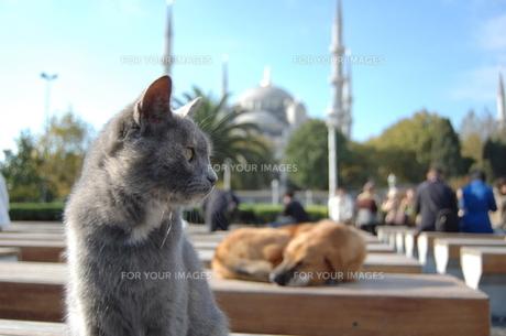 ブルーモスクと猫と犬の素材 [FYI00177925]