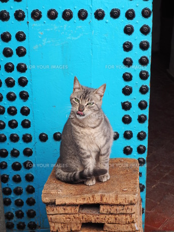 モロッコの猫の写真素材 [FYI00177970]