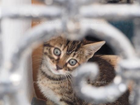 モロッコの猫の素材 [FYI00177986]