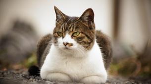 猫の写真素材 [FYI00178076]