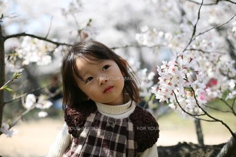 桜と女の子の素材 [FYI00178114]