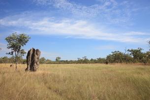 オーストラリアの風景−草原とアリ塚の素材 [FYI00178153]