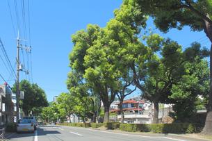街路樹の写真素材 [FYI00178291]