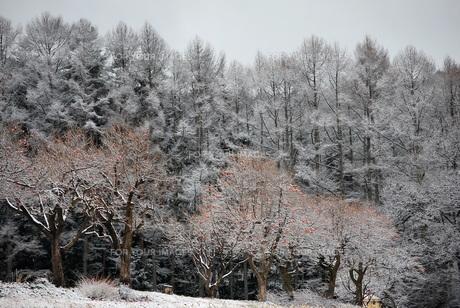 初雪の写真素材 [FYI00178339]
