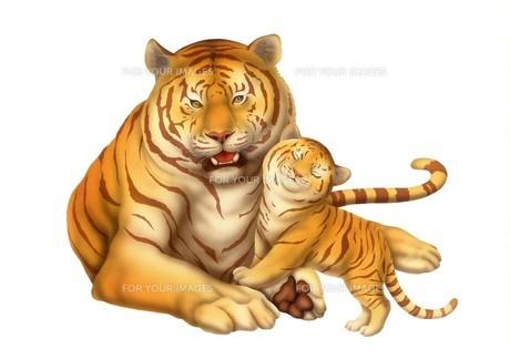 虎の親子の写真素材 [FYI00178430]