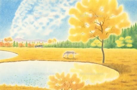 白い馬のいる湖畔の秋の写真素材 [FYI00178517]