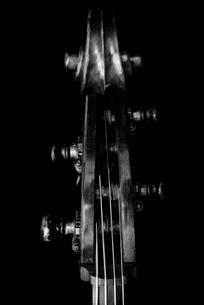 コントラバスのヘッドの写真素材 [FYI00178652]