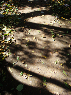 木漏れ日の写真素材 [FYI00178812]