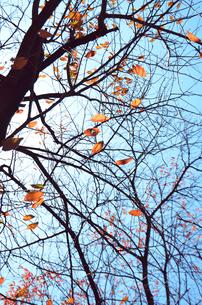 秋の写真素材 [FYI00178824]