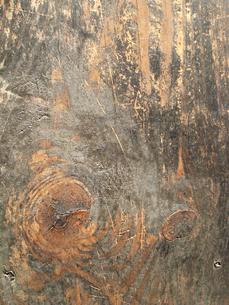 木の写真素材 [FYI00178830]