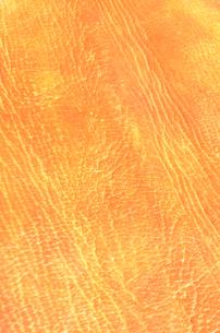 革の写真素材 [FYI00178986]