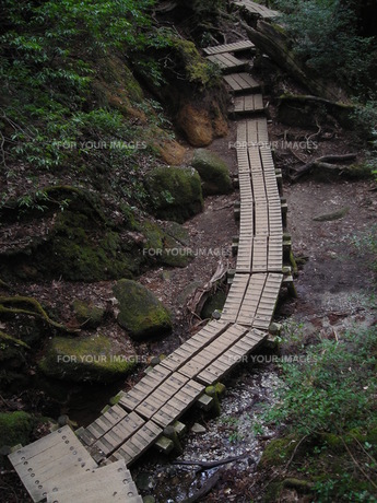 屋久島 登山道の写真素材 [FYI00179261]