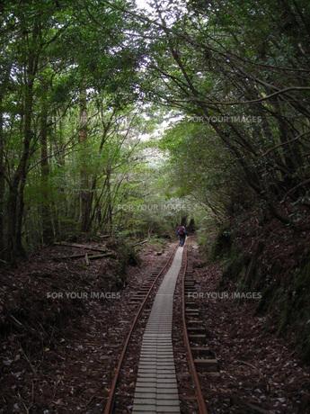 屋久島 登山道(トロッコ道)の写真素材 [FYI00179262]