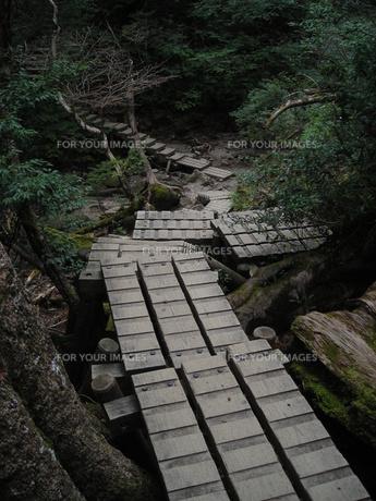 屋久島 登山道2の写真素材 [FYI00179277]