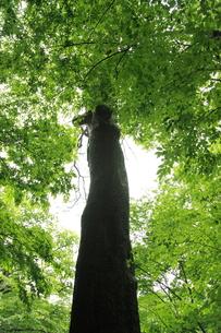 樹木の素材 [FYI00179362]