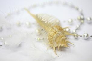 貝殻とパールネックレスの写真素材 [FYI00179364]
