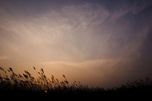 葦原の写真素材 [FYI00179395]