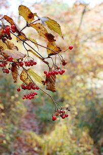森で出会う色の写真素材 [FYI00179733]