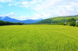 お花畑の写真素材 [FYI00179766]