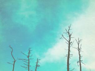 青く澄んだ空と雲と木立の写真素材 [FYI00179791]