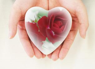 ハートのお守り(手のひらの上の紅い薔薇)の写真素材 [FYI00179795]