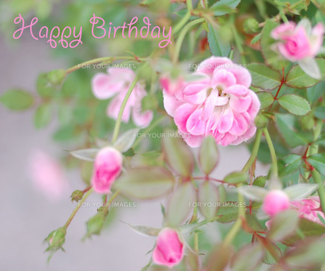 Happy Birthdayの写真素材 [FYI00179863]
