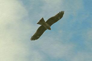 大空に舞う鳥の素材 [FYI00179901]