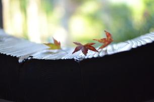 紅葉の始まりの写真素材 [FYI00179975]
