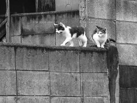 猫の兄弟の写真素材 [FYI00179977]