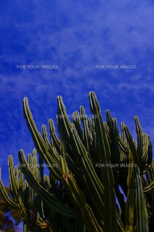 青空とサボテンの写真素材 [FYI00180197]