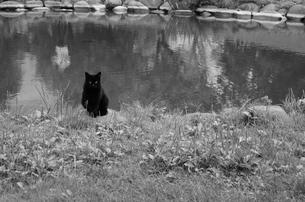 猫の写真素材 [FYI00180275]
