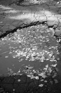 路の写真素材 [FYI00180289]