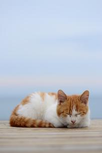昼寝している猫(ぽかぽか)の写真素材 [FYI00180335]