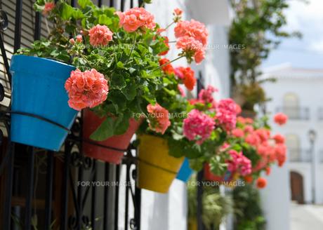 窓辺の花の写真素材 [FYI00180336]
