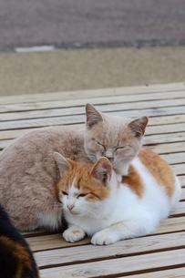 寄り添う猫の素材 [FYI00180338]