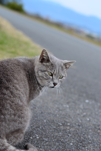 道と振り向く猫の写真素材 [FYI00180343]