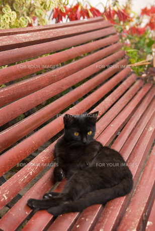 ベンチの上の黒猫の写真素材 [FYI00180344]